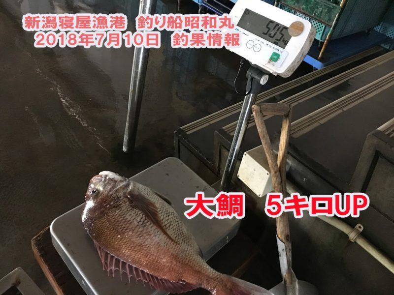 寝屋漁港大鯛釣れました
