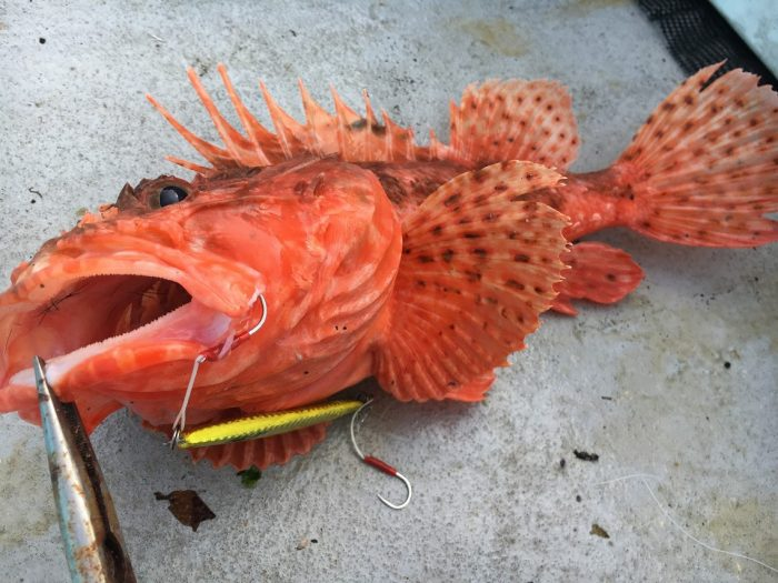 オニカサゴのルアー釣り方
