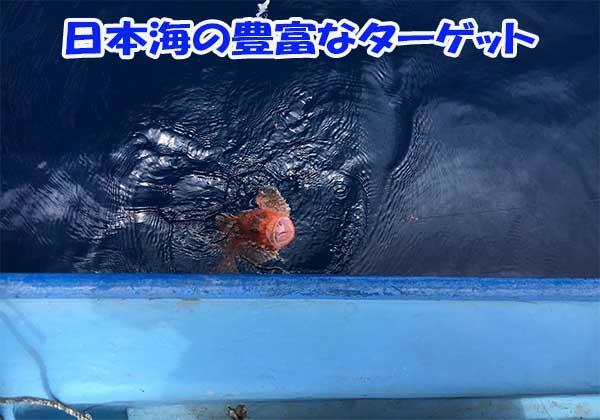 日本海の豊富な釣りの獲物