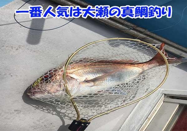 新潟で一番人気の大瀬ルアーマダイ釣り