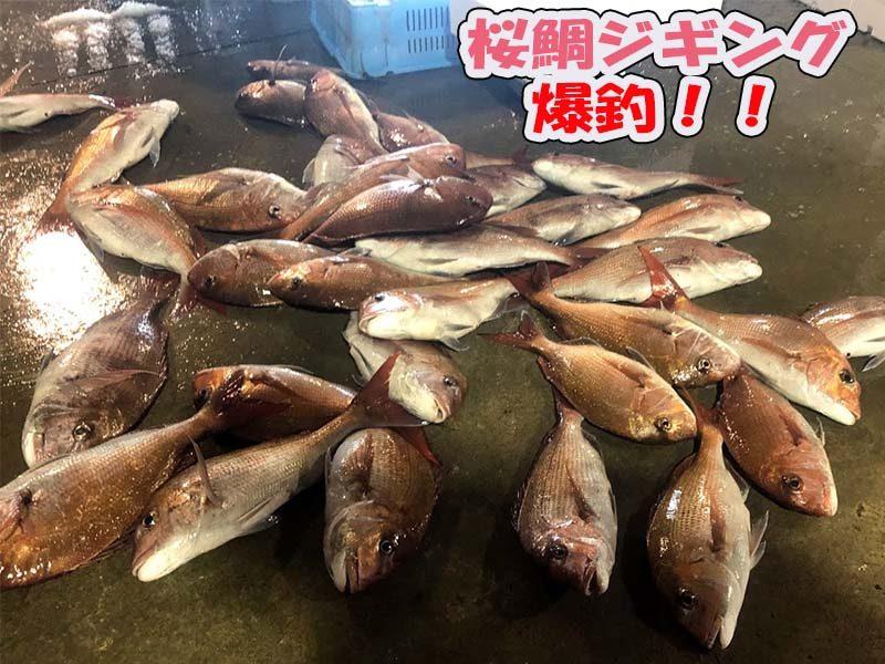 寝屋漁港桜鯛爆釣