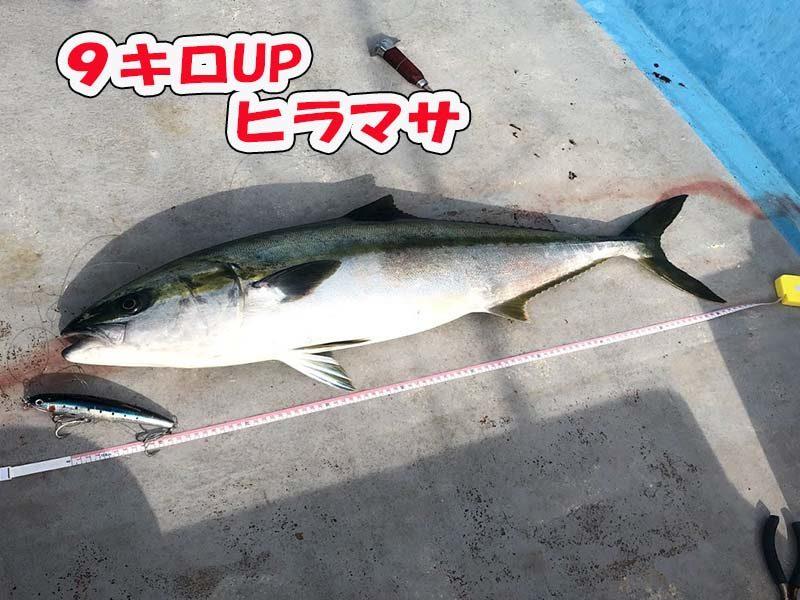 粟島でヒラマサをトップウォーターゲームで釣る