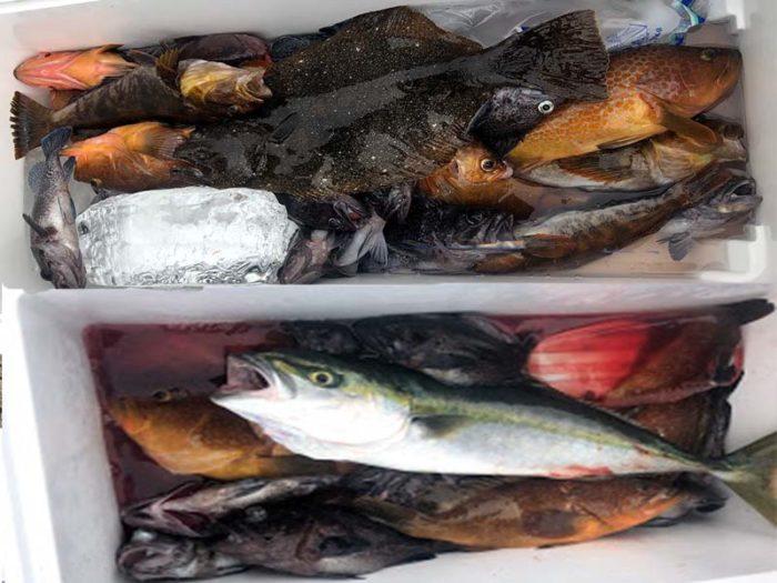 釣り船昭和丸ライトジギング釣果状況