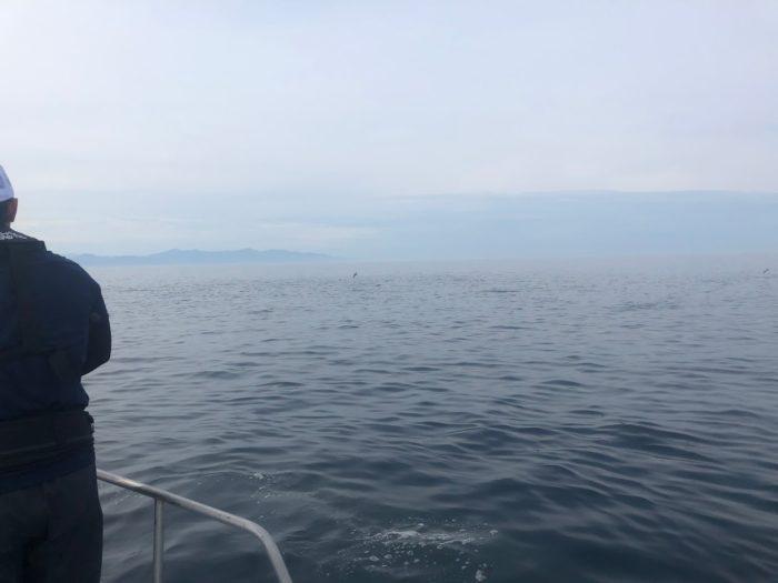 山形大瀬海域キャスティング