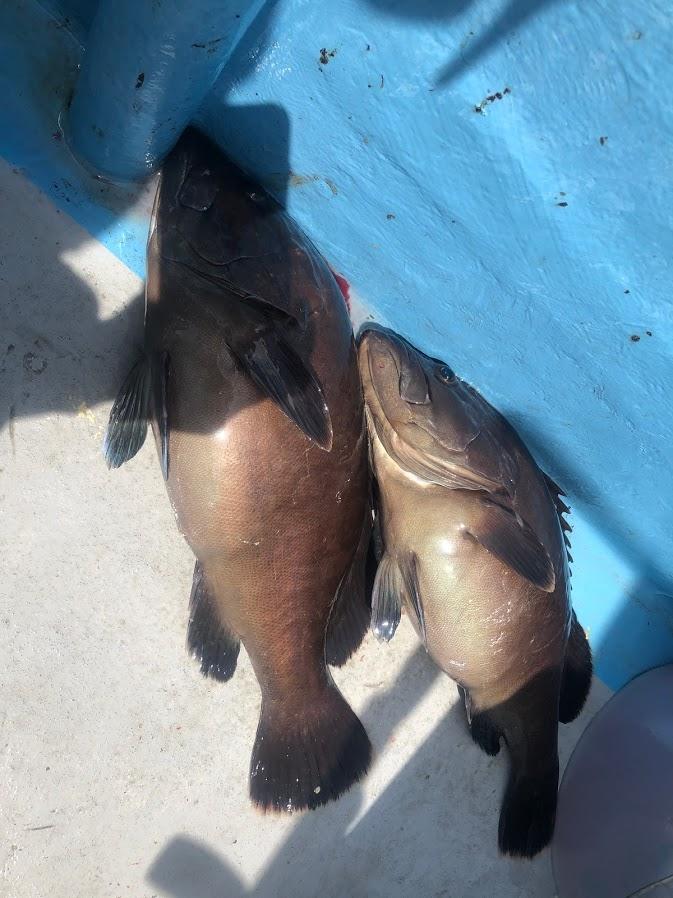 ジギングで爆釣した高級魚マハタ