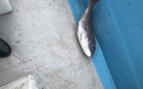 タイジグ真鯛
