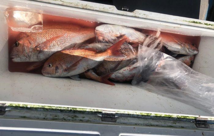 船中二桁の真鯛釣果