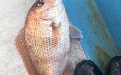 タイラバで夏の真鯛が良く釣れる