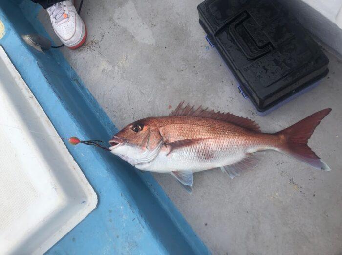 タイラバで桜鯛が釣れた