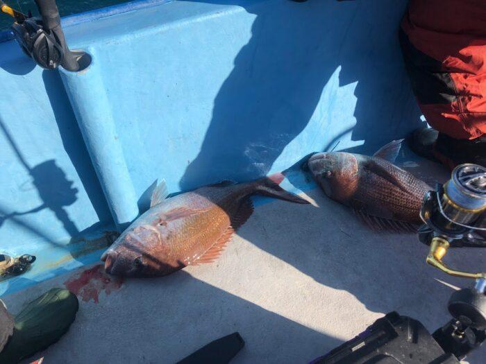 新潟大瀬タイラバで桜鯛ダブルヒット