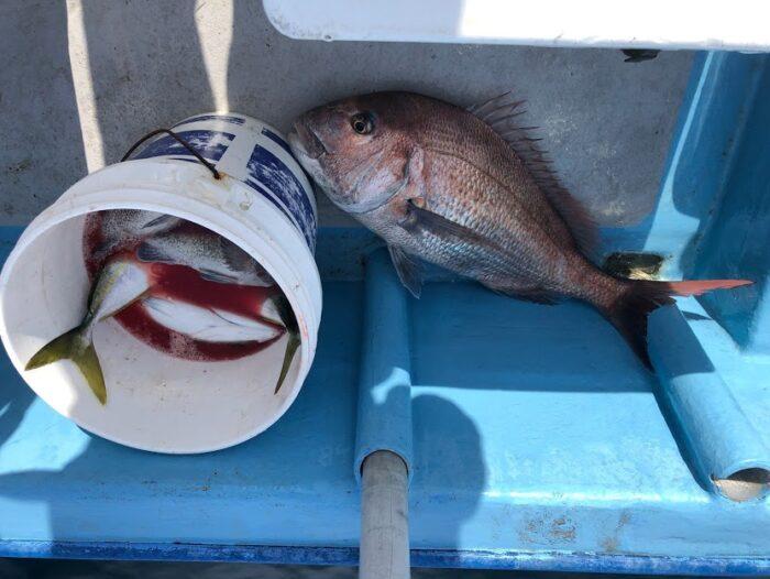 粟島近海で釣れた大鯛