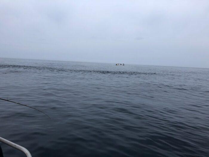ナブラ鳥山で青物が釣れる