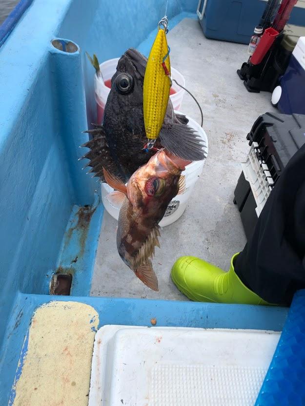 ルアーに二匹の魚が釣れる