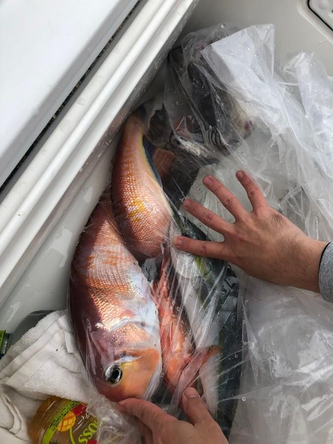 タイラバでアマダイの釣果