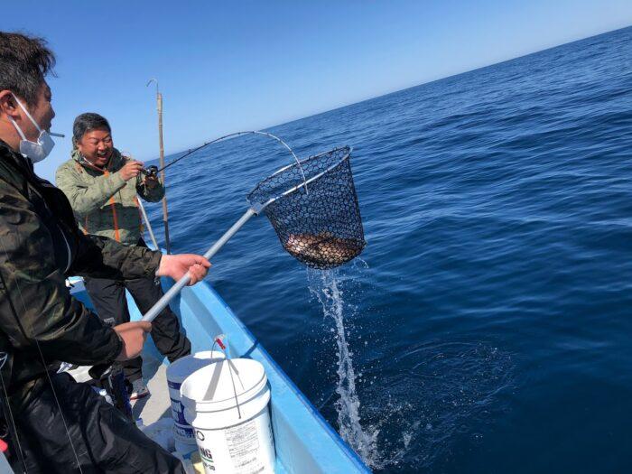マハタを釣り上げる