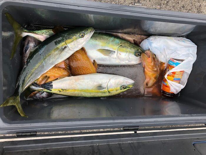 ライトジギングで釣れた魚が入るクーラー