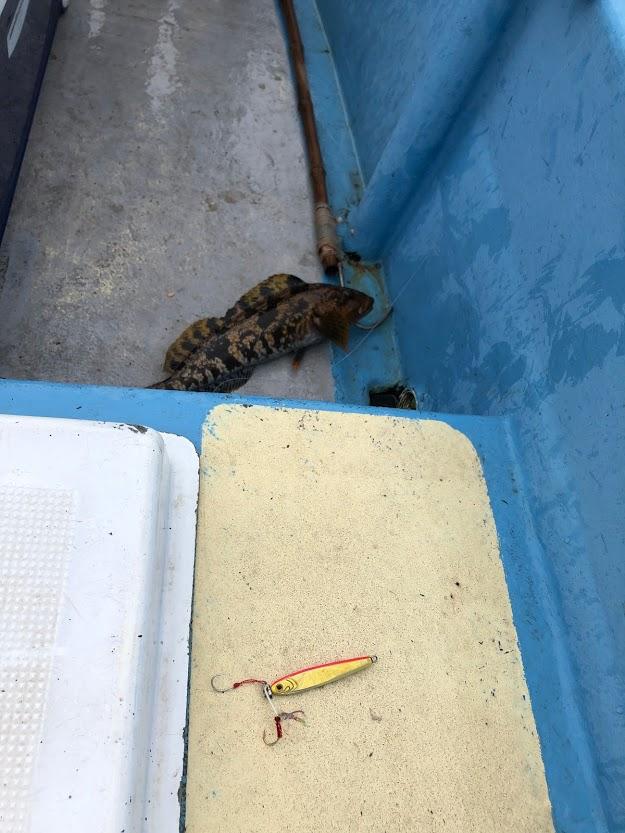 粟島ジギングで釣れたアイナメ