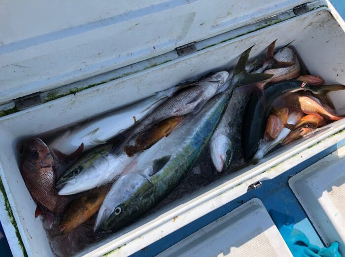 200リットルのクーラーボックスが魚で一杯
