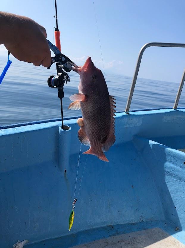 新潟大瀬のジギングで釣れたコブダイた