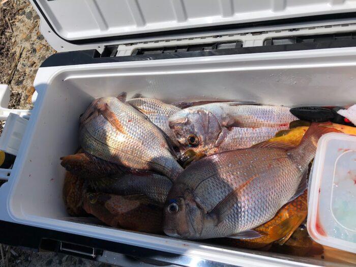 一番沢山魚を釣ったお客様のクーラーボックス