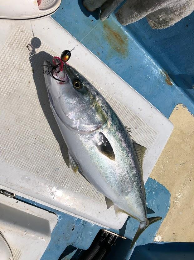 タイラバでも青物が釣れます
